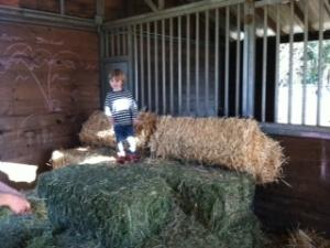 Farm Tots Cover
