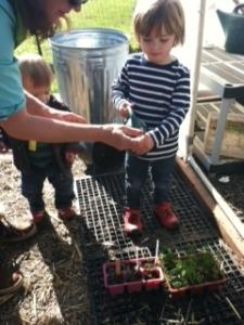 Farm Tots Plants